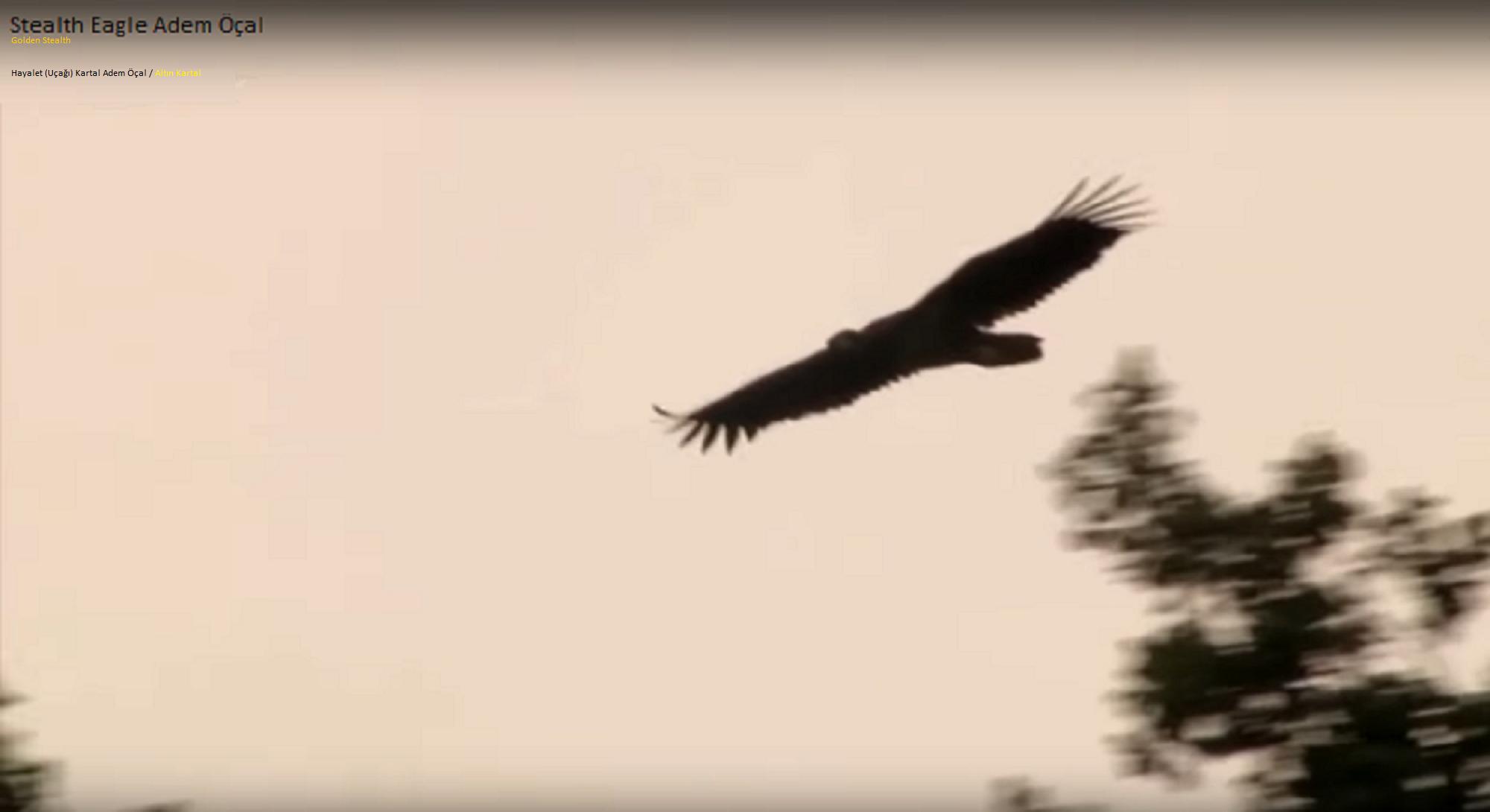 Stealth Eagle Adem Öçal