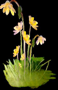 sarı çiçek2
