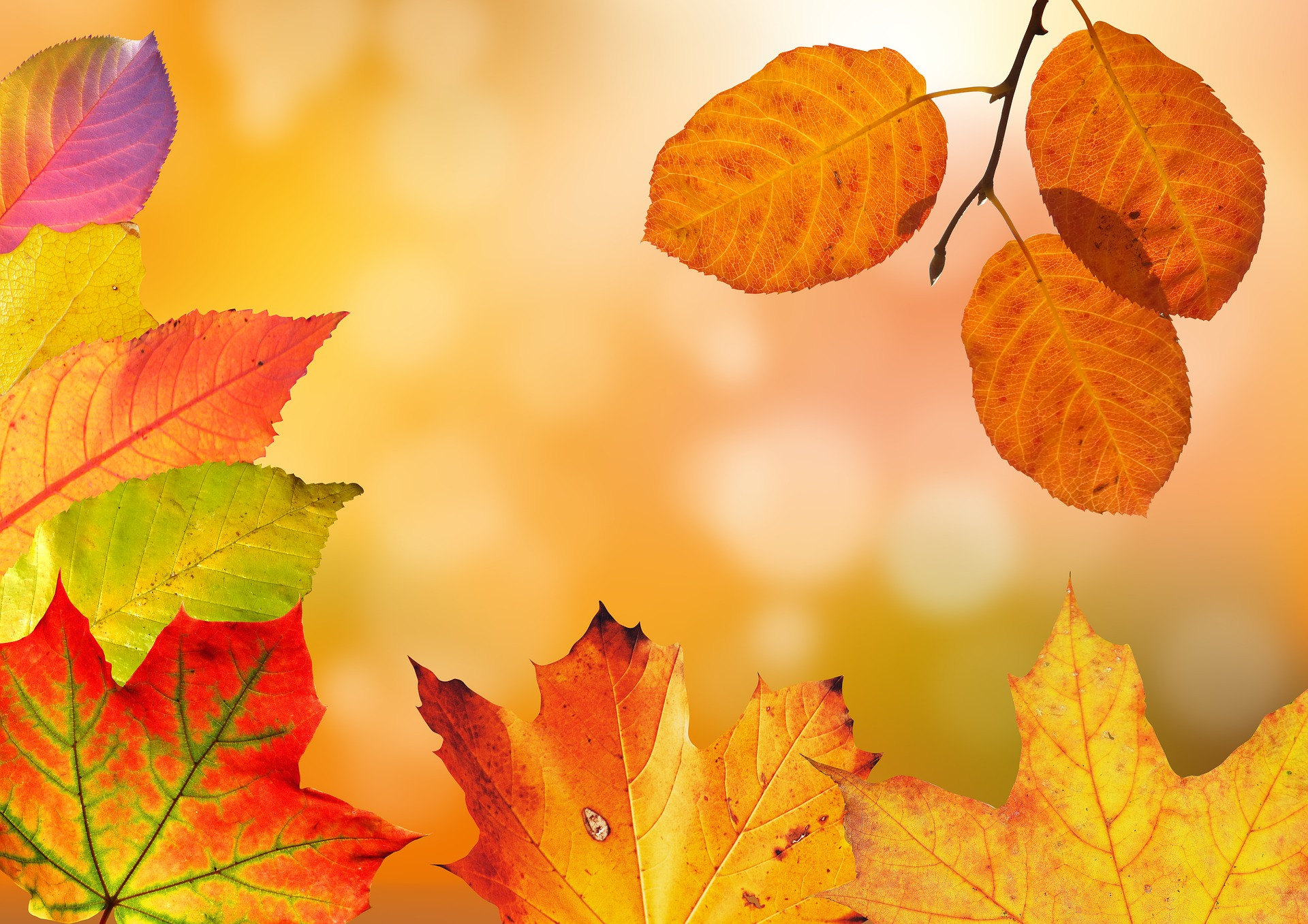 autumn-1649362_1920