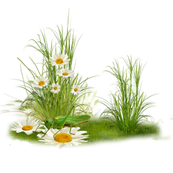 tube-png-herbe-5
